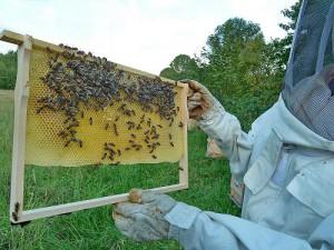 Biene, Honigwabe, Imker, Honig