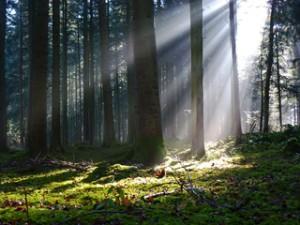 Wald, Lichteinfall