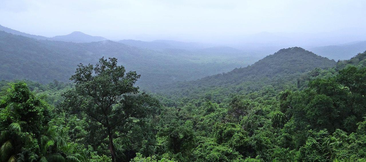 rainforest-384944_1280