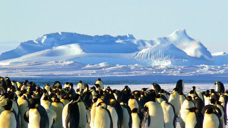antarktis-pinguine
