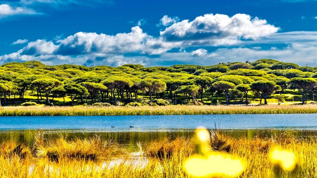 Ein Mangrovenwald im Hintergrund. Im Vordergrund ein Fluß und eine vertrocknete Wiese.