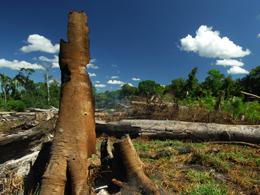 Regenwald, vernichtung, Wald, zerstörung, abholzung, abholzen