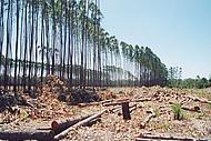 Regenwald, gerodet, abgeholzt, zerstört, Urwald, Tropenholz