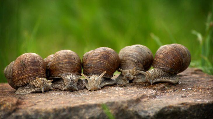 Fünf Weinbergschnecken die auf einem Stein sitzen