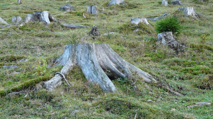 Ein abgeholzter Berghang auf dem nur noch Baumstümpfe zu sehen sind.