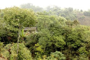 Eine Hütte im Regenwald