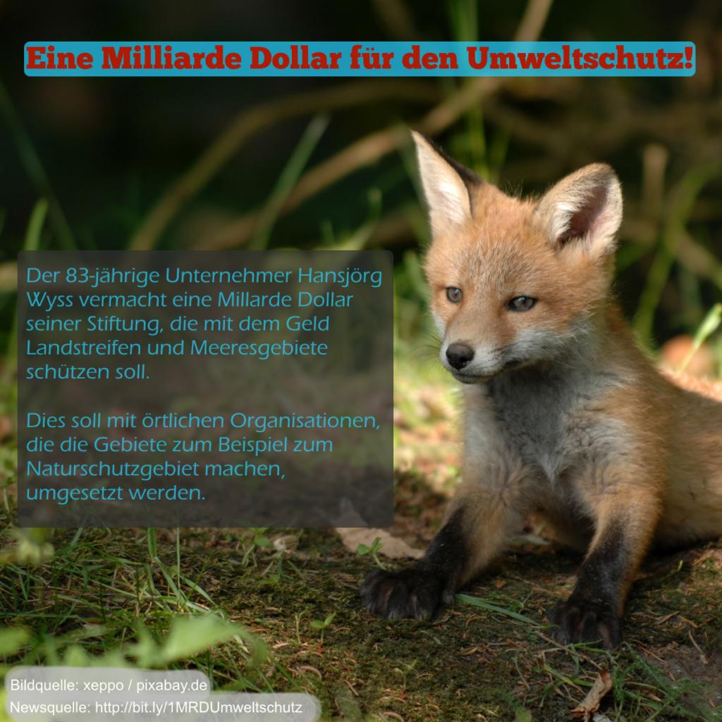 Ein Bild von einem Fuchs mit der Nachrichtenmeldung, dass ein Unternehmer eine Milliarde Dollar für den Umweltschutz spendet.