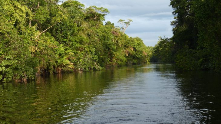Ein Fluss im Regenwald