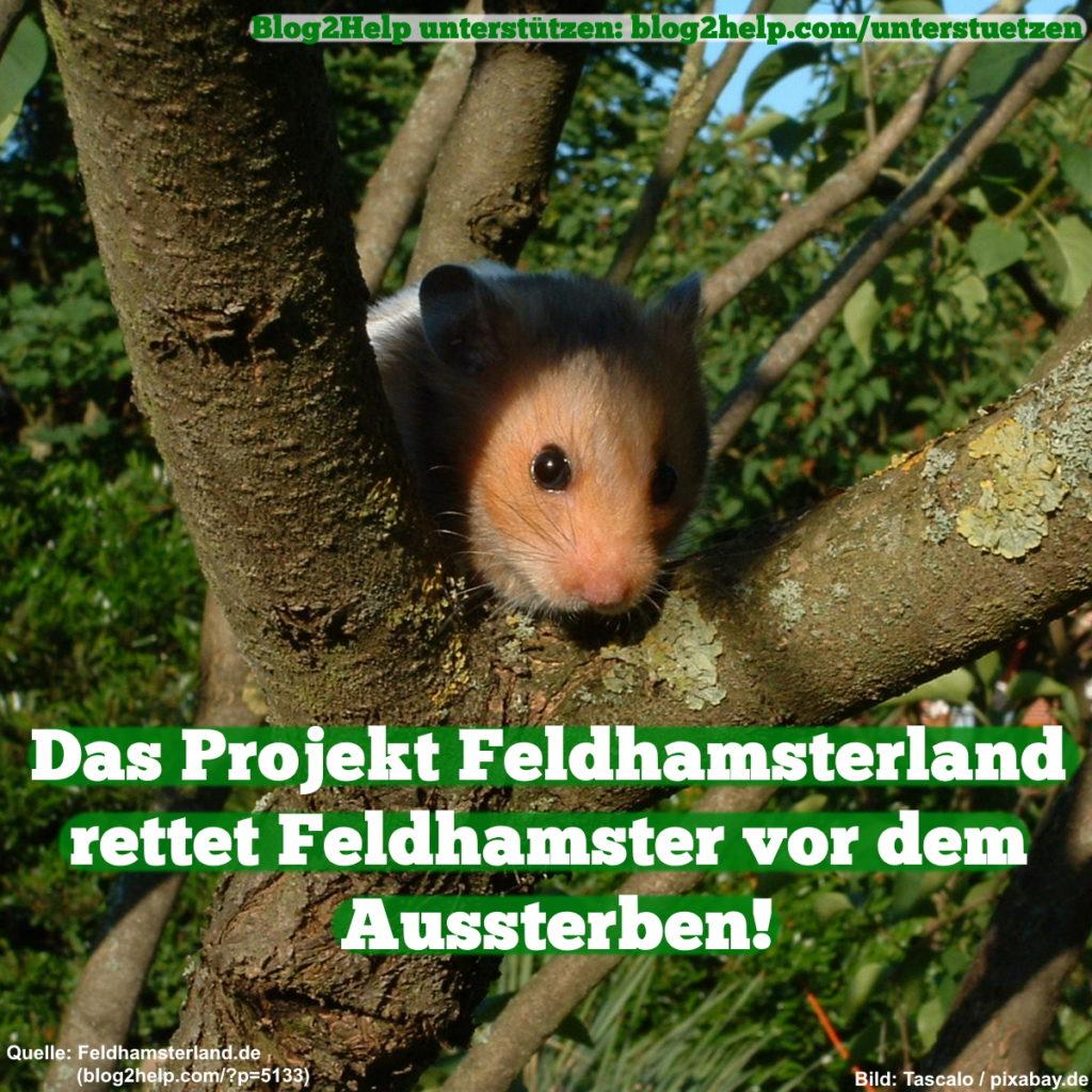 Das Projekt Feldhamsterland rettet Feldhamster vor dem Aussterben