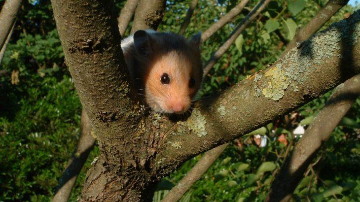 Ein Hamster auf einem Baum