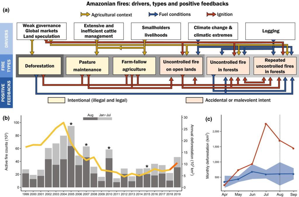 Gründe und Häufigkeit der Waldbrände im Amazonas-Regenwald