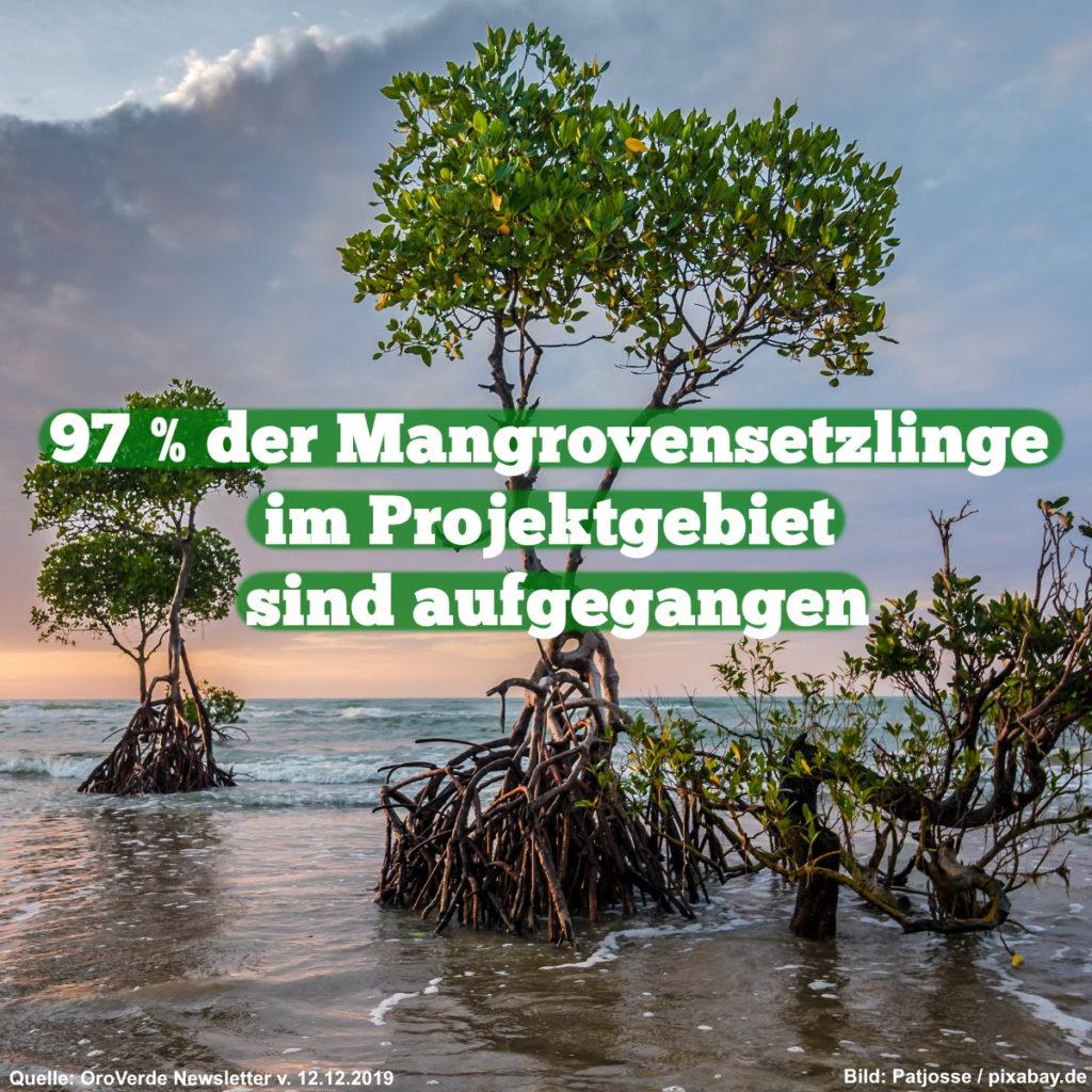 97 % der Mangrovensetzlinge im Projektgebiet sind aufgegangen