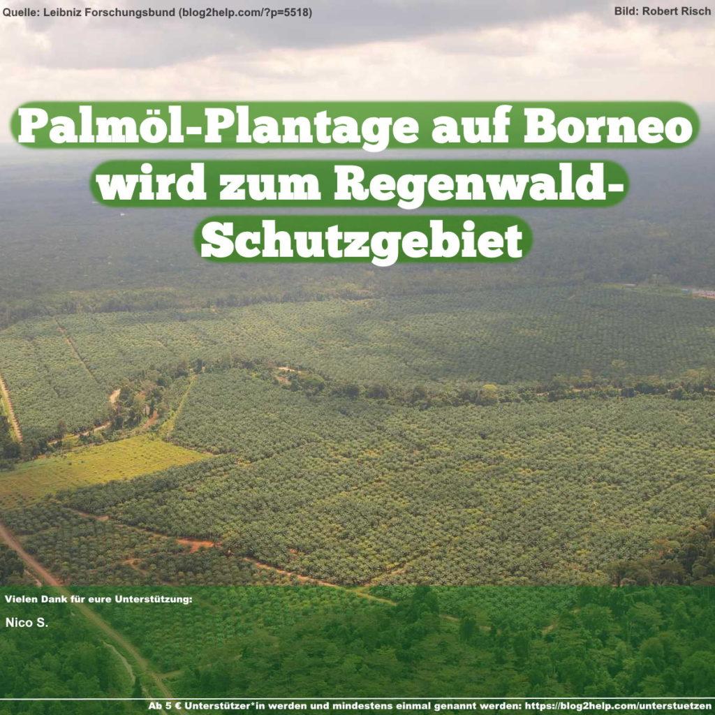 Palmöl-Plantage auf Borneo wird zum Regenwald-Schutzgebiet