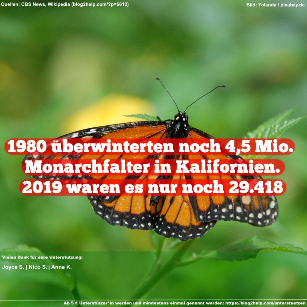 1980 überwinterten noch 4,5 Mio. Monarchfalter in Kalifornien. 2019 waren es nur noch 29.418