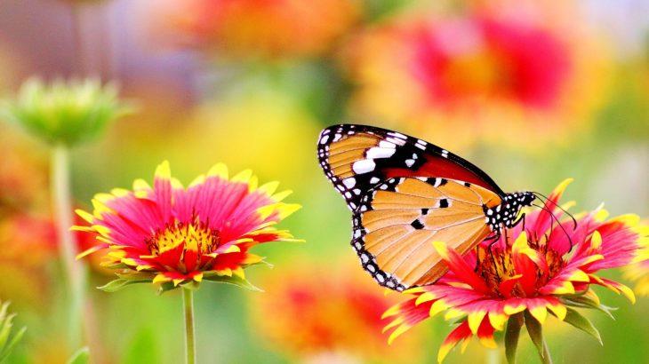 Ein Schmetterling auf einer Blume