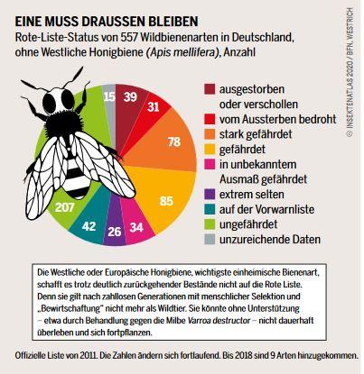 Rote Liste der Wildbienen in Deutschland
