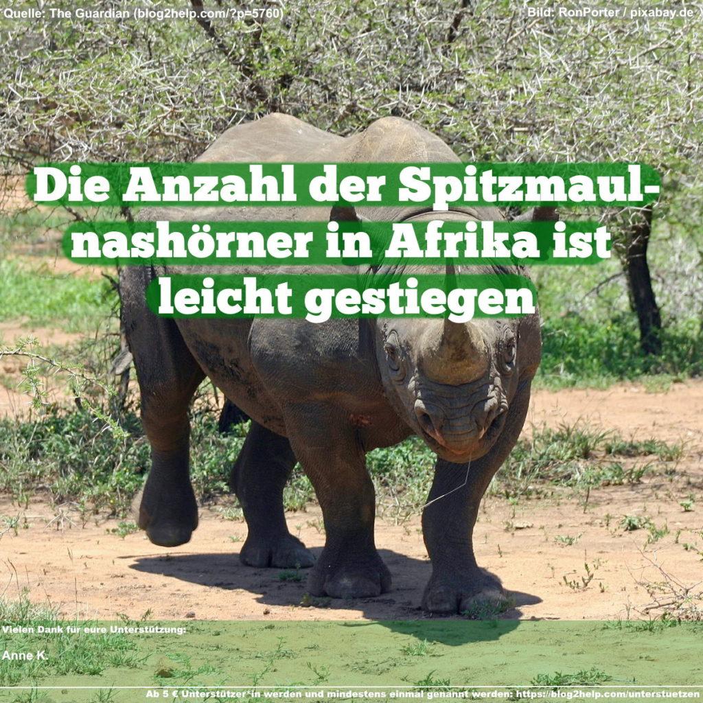 Die Anzahl der Spitzmaulnashörner in Afrika ist leicht gestiegen