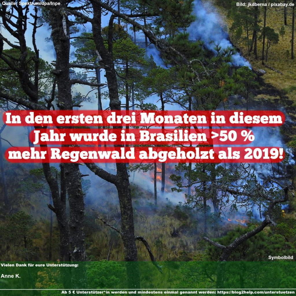 In den ersten drei Monaten in diesem Jahr wurde in Brasilien >50% mehr Regenwald abgeholzt als 2019