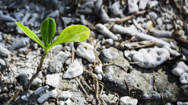 Eine Pflanze wächst durch Gestein, das macht Hoffnung