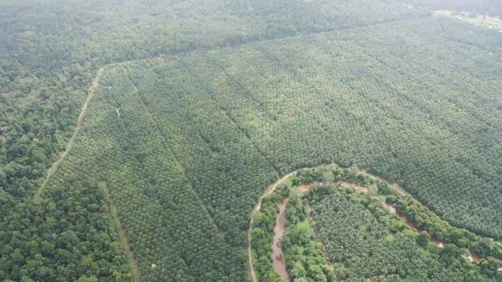 Palmölplantage im Regenwald