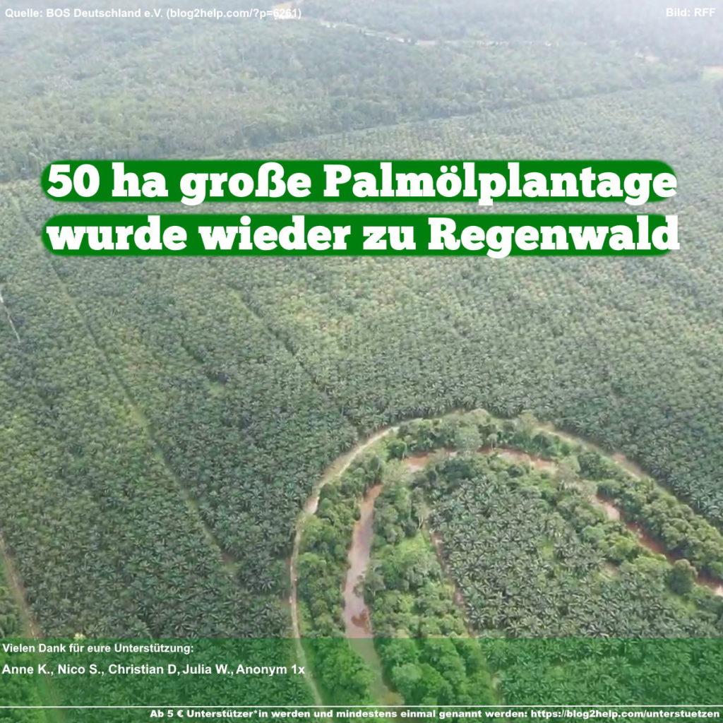 Meme: 50 ha große Palmölplantage wurde wieder zu Regenwald