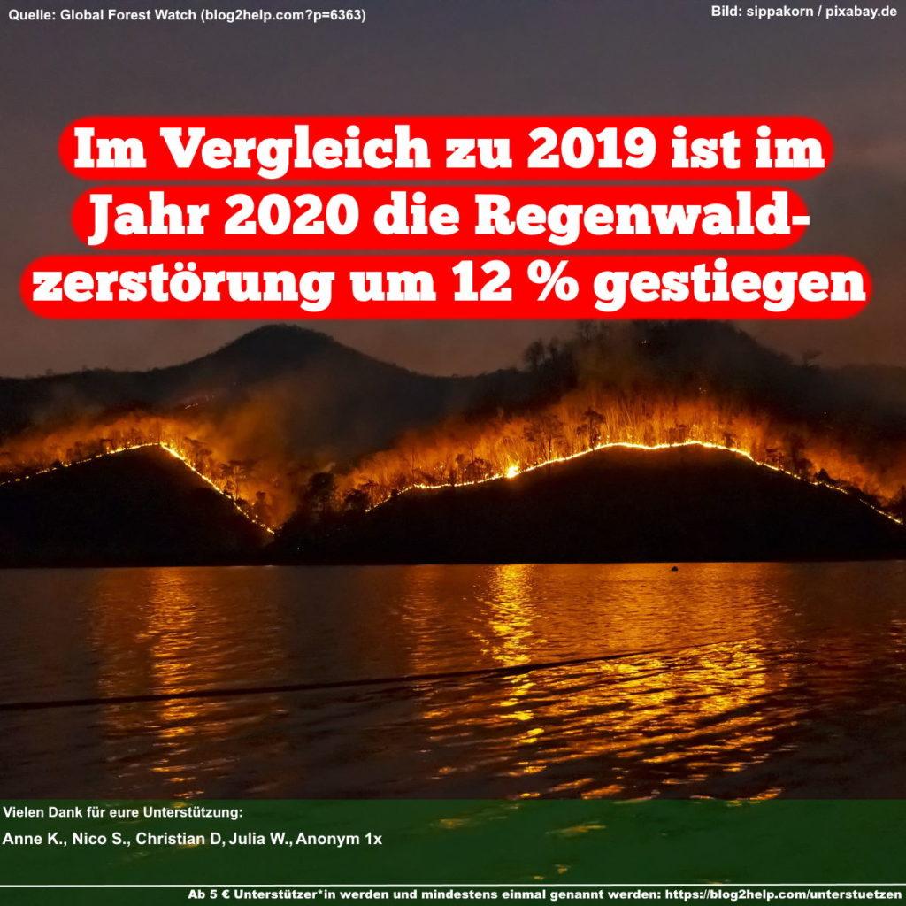 Im Vergleich zu 2019 ist im Jahr 2020 die Regenwald-Zerstörung um 12 % gestiegen