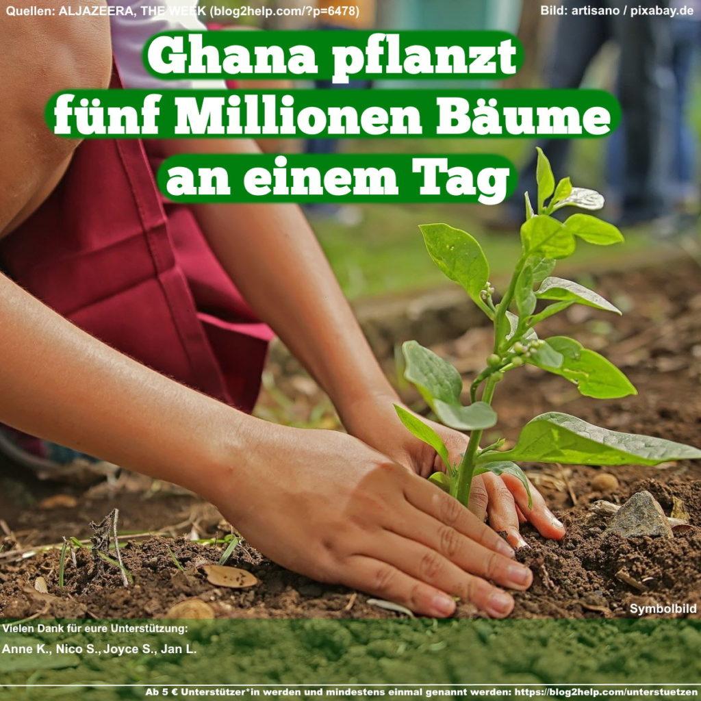 Ghana pflanzt fünf Millionen Bäume an einem Tag