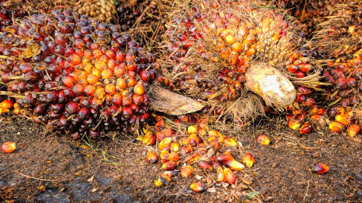 Palmöl-Frucht