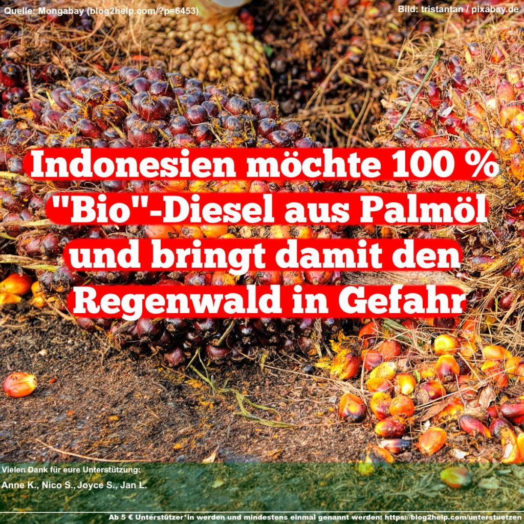 """Indonesien möchte 100 % """"Bio""""-Diesel aus Palmöl und bringt damit den Regenwald in Gefahr"""