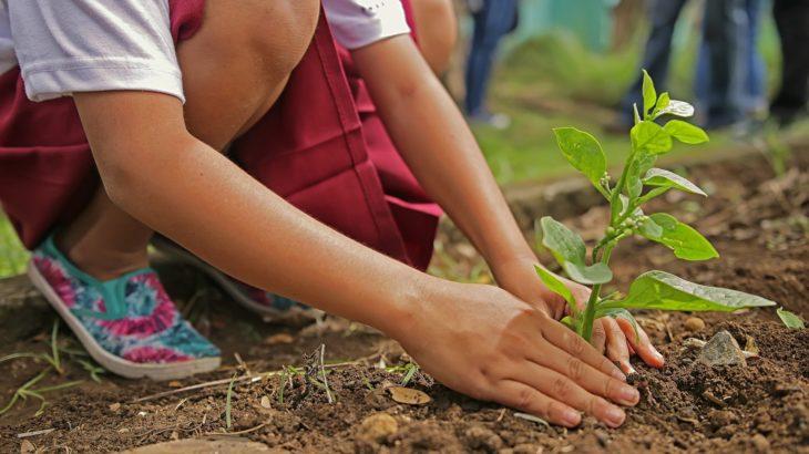 Kind pflanzt Baum